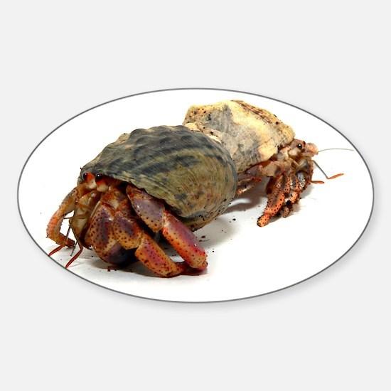 Wandering Hermit Crabs Oval Decal