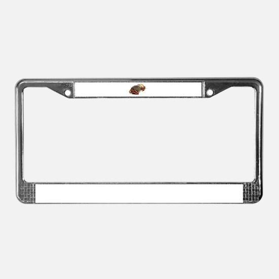 Wandering Hermit Crabs License Plate Frame