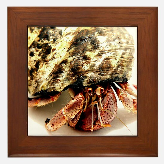 Hermit Crab Up Close and Pers Framed Tile