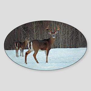 Buck & Doe Oval Sticker