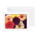 Vibrant Daisy Greeting Cards (Pk of 10)