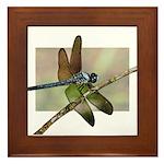 2018 Dragonfly Framed Tile