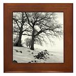Oshkosh Oak Tree Framed Tile