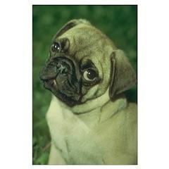 Pug Dog Posters