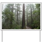 Redwood Forest Fog Yard Sign