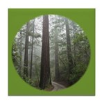 Redwood Forest Fog Tile Coaster