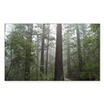 Redwood Forest Fog Rectangle Sticker