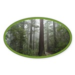 Redwood Forest Fog Oval Sticker