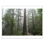 Redwood Forest Fog Small Poster