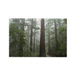 Redwood Forest Fog Rectangle Magnet (100 pack)