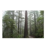 Redwood Forest Fog Postcards (Package of 8)