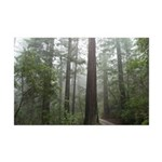 Redwood Forest Fog Mini Poster Print