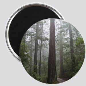 Redwood Forest Fog Magnet