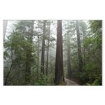 Redwood Forest Fog Large Poster