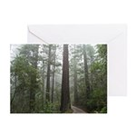 Redwood Forest Fog Greeting Cards (Pk of 20)