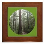 Redwood Forest Fog Framed Tile