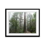 Redwood Forest Fog Framed Panel Print