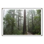 Redwood Forest Fog Banner