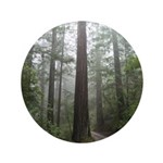 Redwood Forest Fog 3.5