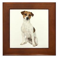 Jack Russell Terrier Framed Tile