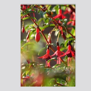 Postcards (Package Of 8) - Fuchsia