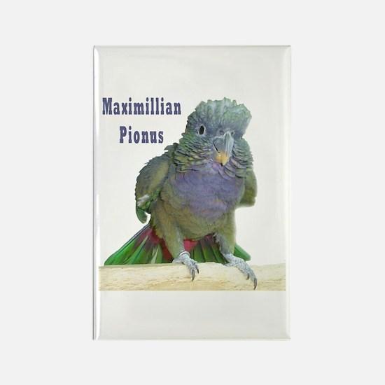 Maximillian Pionus Rectangle Magnet