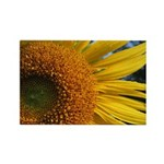 Sunflower #5 Rectangle Magnet