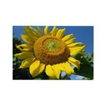 Sunflower #1 Rectangle Magnet (10 pack)