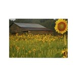 Sunflower field and barn Magnet (10 pack)
