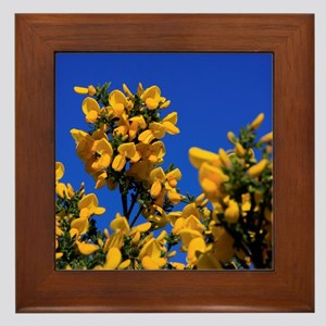 Framed Tile - Featuring Yellow Gorse