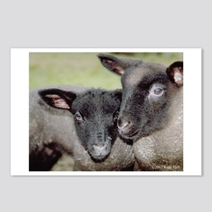Lambs Postcards (Package of 8)
