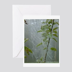 Morning Spiderweb Greeting Cards (Pk of 10)