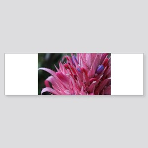 bromeliad Bumper Sticker