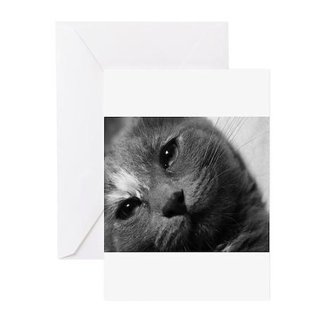 Grey tilt Greeting Cards (Pk of 10)