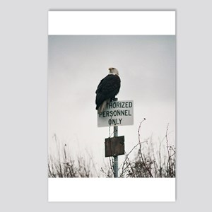 Legal Eagle Postcards (Package of 8)