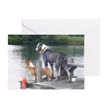 Best Friends Dock Dogs Greeting Cards (Pk of 20)