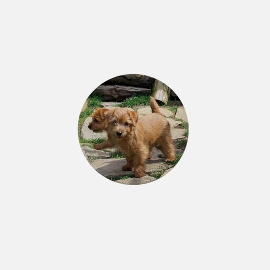 Norfolk Terrier Playmates Mini Button