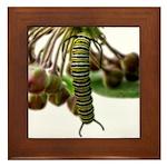 Monarch Butterfly Caterpillar Framed Tile