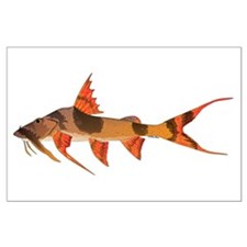 Goonch Catfish Posters