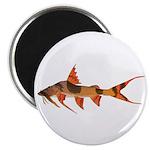 Goonch Catfish Magnets