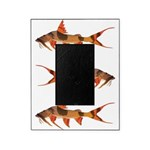 Goonch Catfish Picture Frame