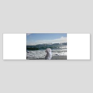 Maltese On the beach Bumper Sticker