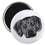 Puggle Puppy Magnet