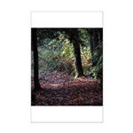 Fall Forest Poster Print