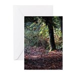 Fall Forest Greeting Cards