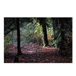 Fall Forest Postcards (Package of 8)