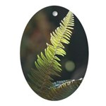 Fern Frond Oval Ornament