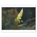 Fern Frond Small Poster