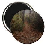 Autumn Path Magnets