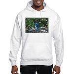 Steller's Jay Hooded Sweatshirt